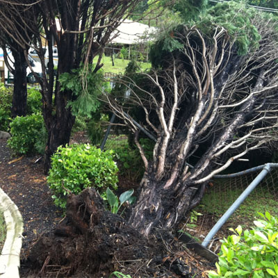 Tree Transplanting Services Harford County Maryland
